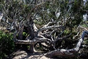 Pescadero Marsh Natural Preserve. Dawn Page/Coastside Slacking
