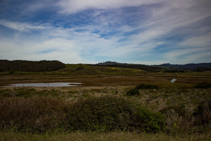 Pescadero Marsh Natural Preserve. Dawn Page/Coastside Slacking