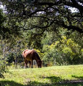 20180926 - wild horses-IMG_1056