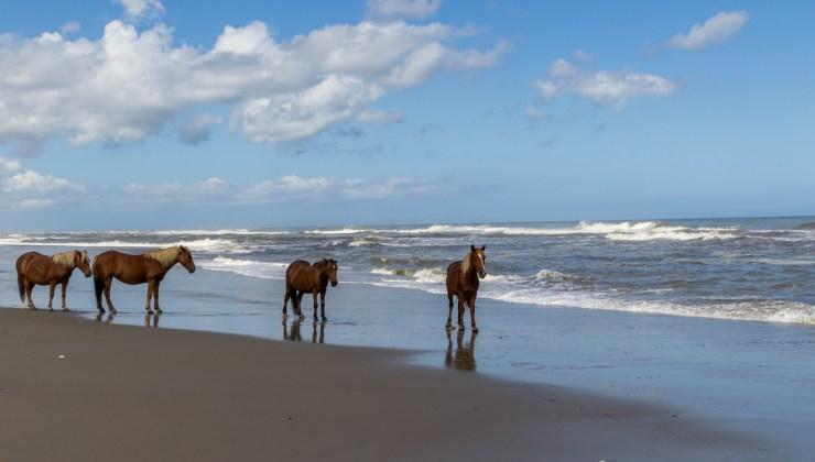 20180926 - wild horses-IMG_1106