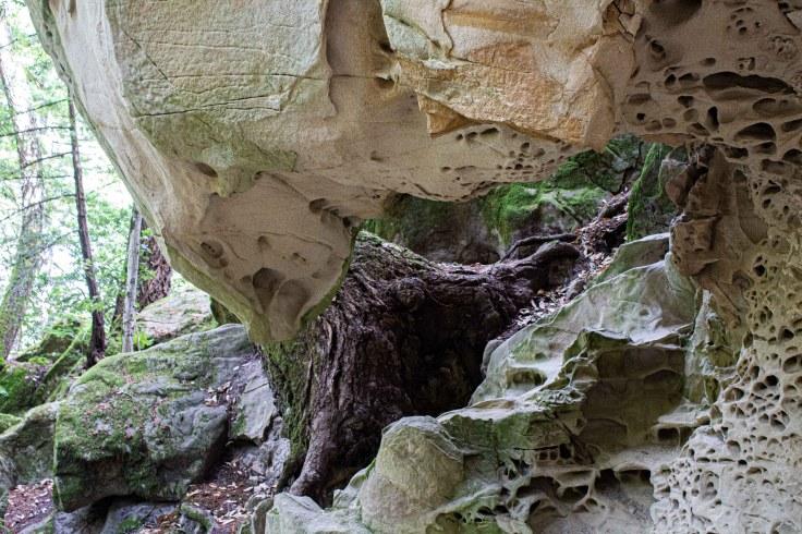Tafoni sandstone formation, El Corte de Madera Creek Preserve. Dawn Page/Coastside Slacking