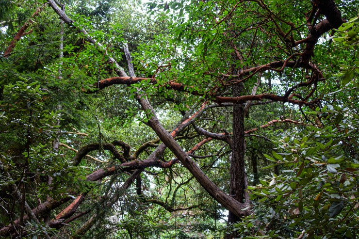 20190810 - el corte madera perserve-IMG_0059