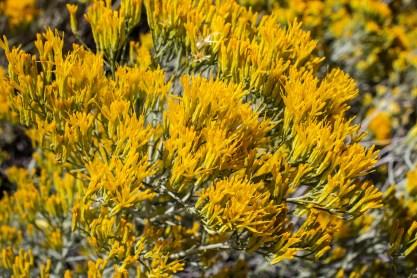 20190923 - Great Basin National Park-IMG_0232