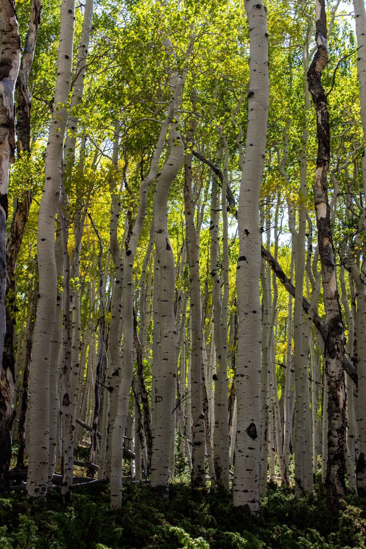 20190924 - pando and fish lake-IMG_0373