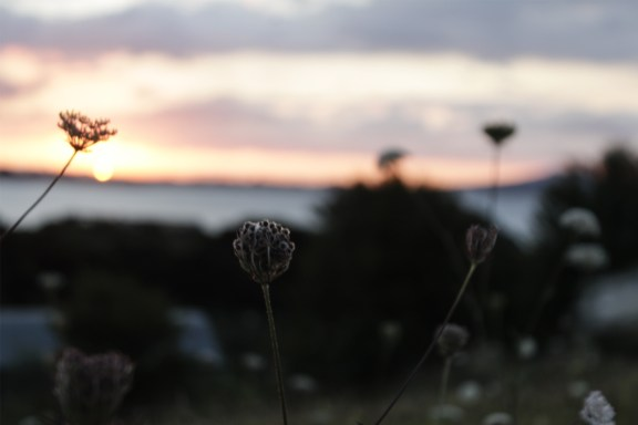 cobaltstate_auckland_enjoyable_flowers_sunset