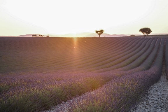 paca_valensole_lavender_fields_sunset_purple