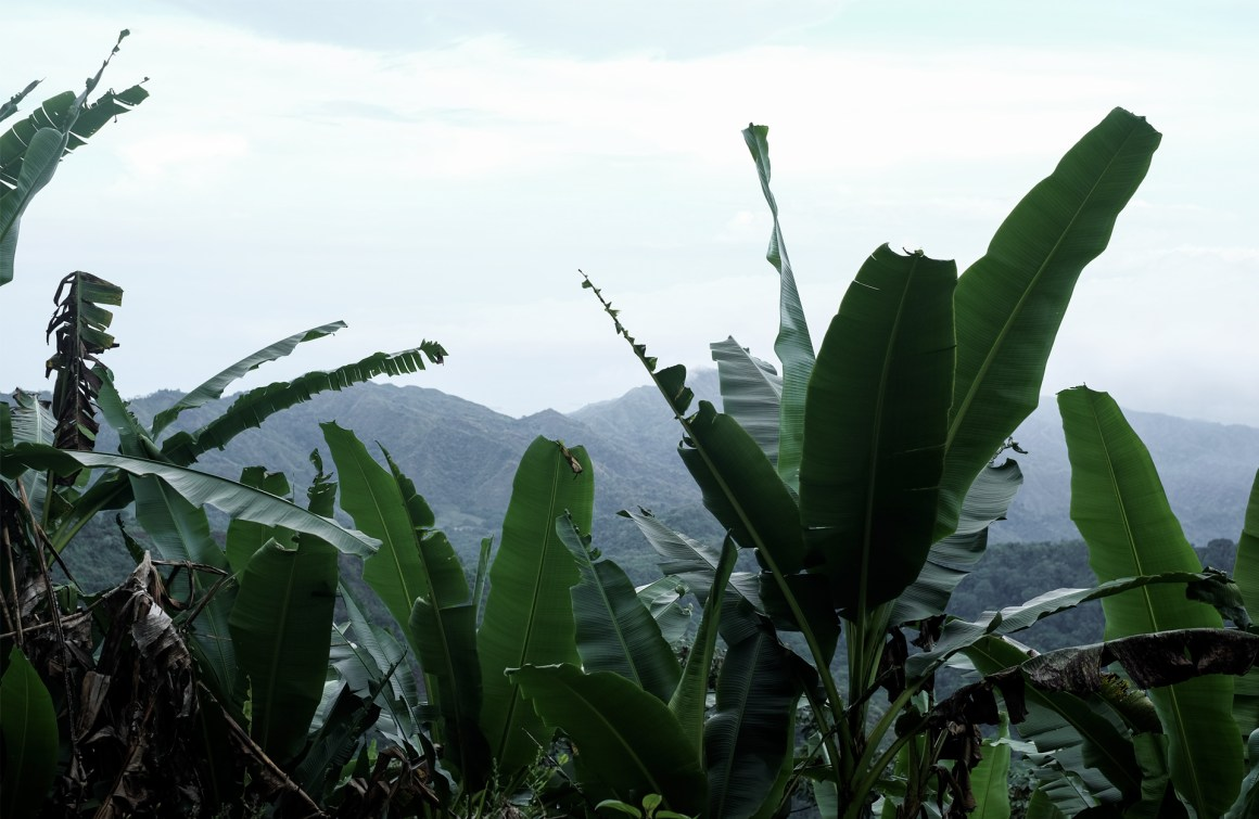 banana trees mountains