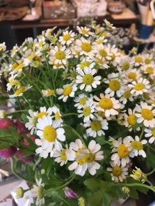 マトリカリア花