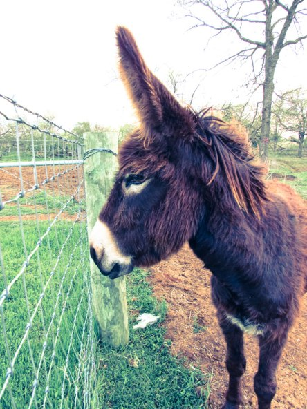 Donkey-112-2