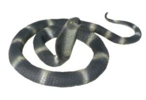 snake prank