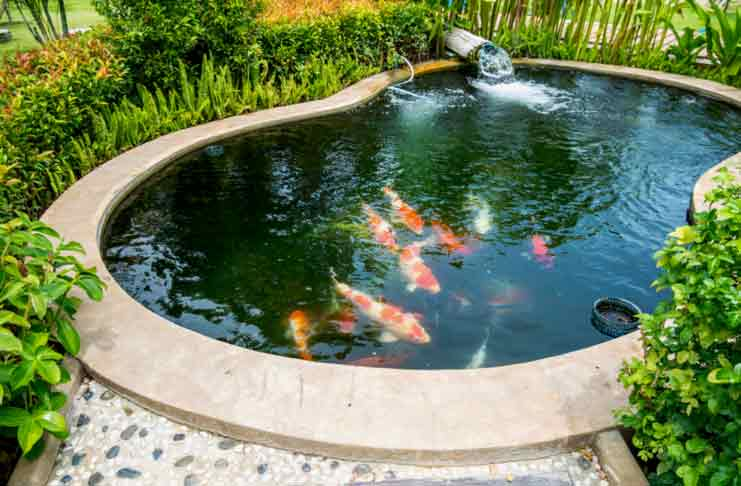 5 secret behind a perfect fish pond for Setting up a garden pond