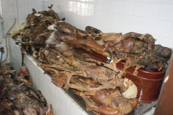 19. Cadáveres amontonados en la Complutense