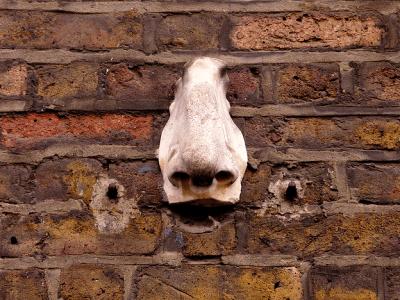 Seven Noses a Soho