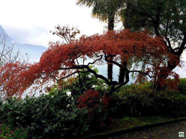 Lugano ed il parco