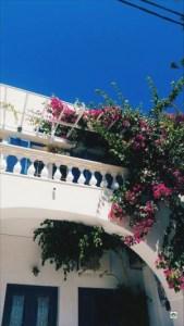 Vacanza a Santorini i fiori - Cocco on the road