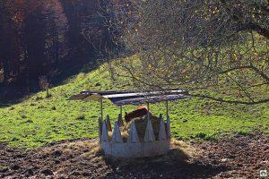 Cavallo sul Cansiglio - Cocco on the road