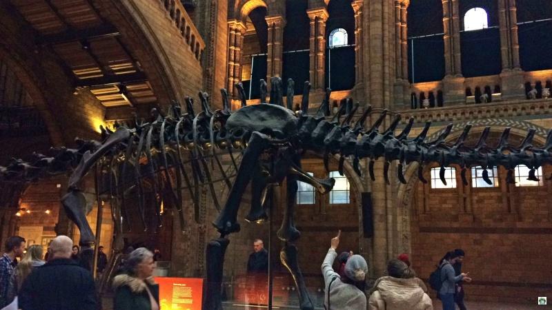 Natural History Museum musei di Londra