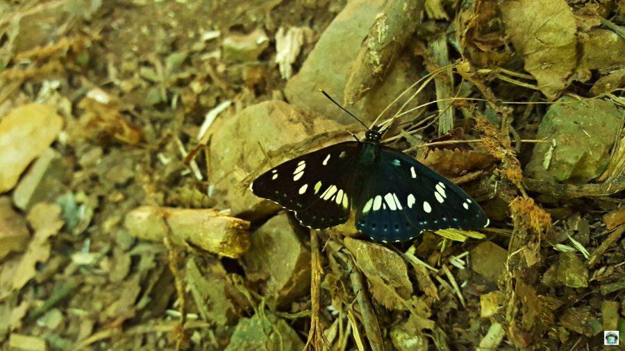 Farfalla alle cascate di Monticelli Brusati - Cocco on the road