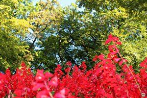 fiori parco giardino Sigurtà