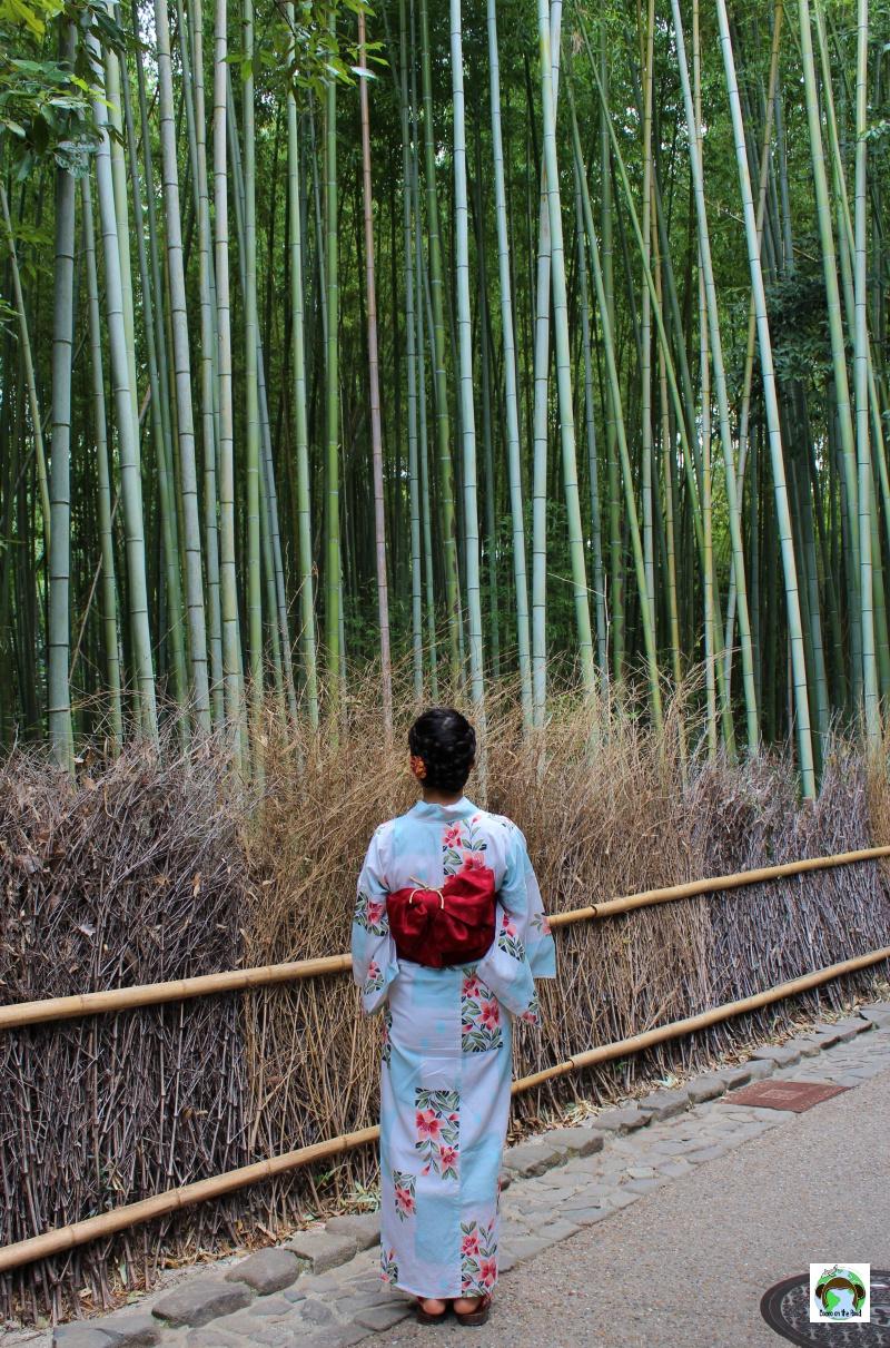 Bamboo Grove a Kyoto