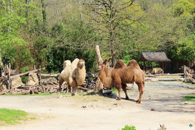 Parco Natura Viva a Bussolengo cosa vedere