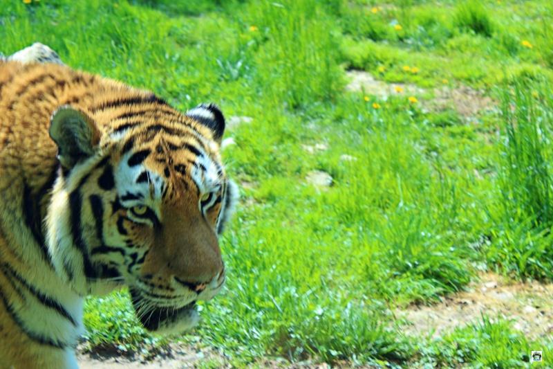 Parco Natura Viva quali animali ci sono
