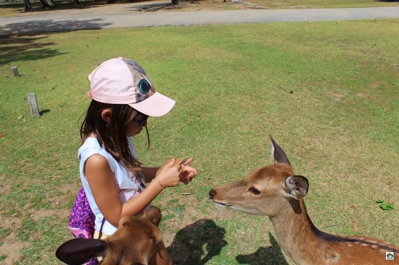Nara visitare parco dei cervi