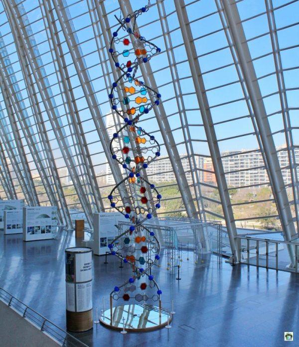 Museo delle Scienze Principe Felipe