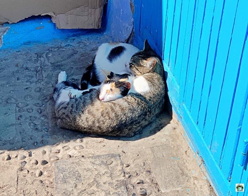 hotel in Marocco gatti