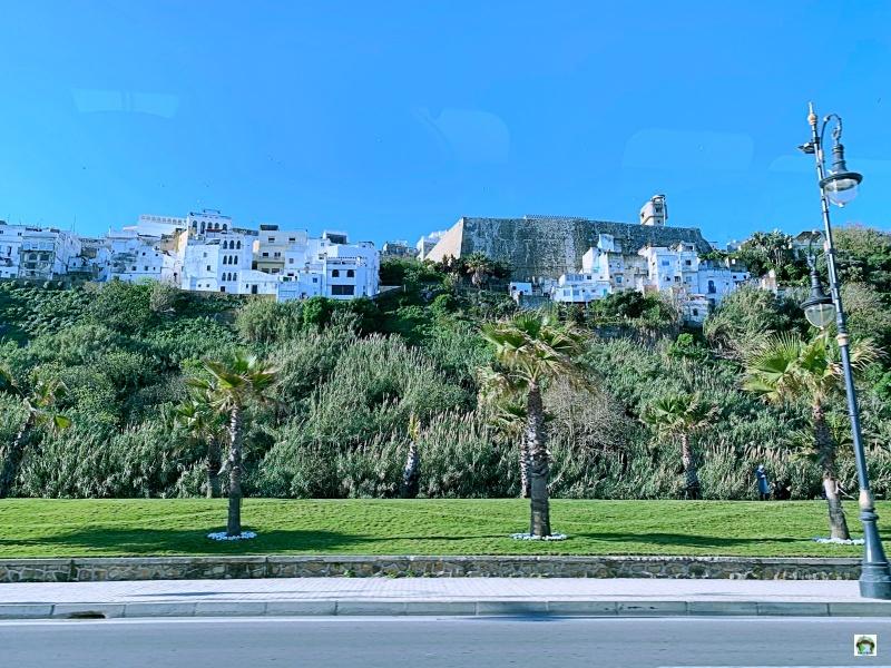 Tangeri vista dal basso palme e case