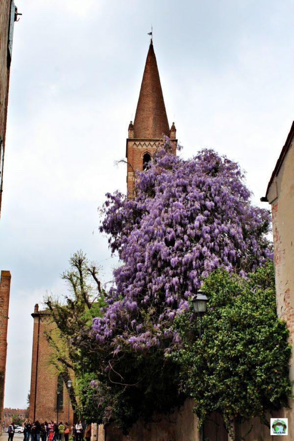 chiesa san francesco Montagnana