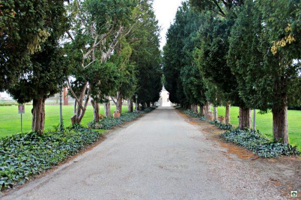 viale alberato castello bevilacqua