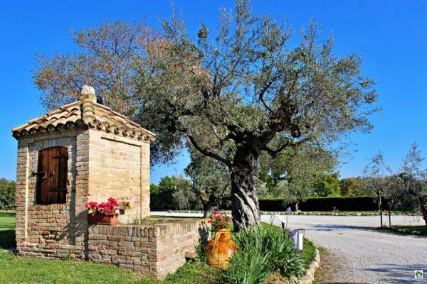 ulivi verde campi Borgo Spoltino