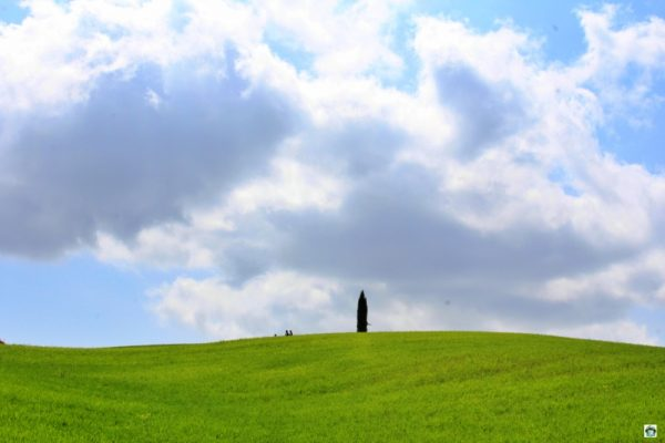 cipresso valle erba verde