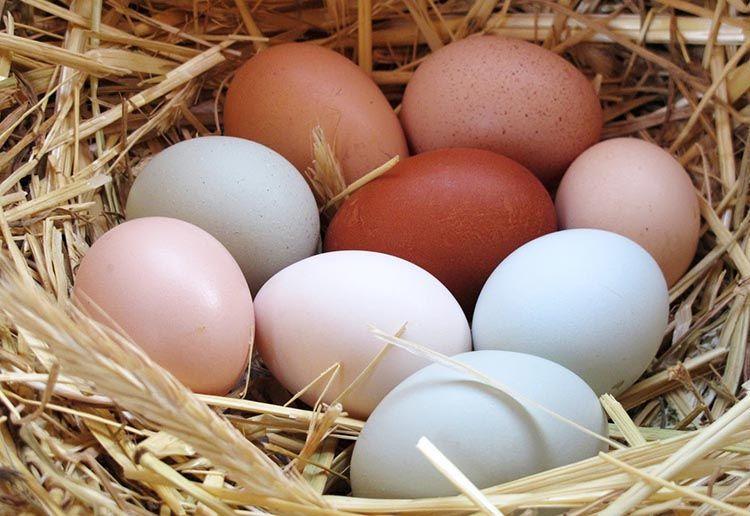 Huevos-de-mesa