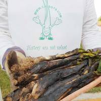 Cómo hacer Calçots o Calsots en una Calçotada tradicional