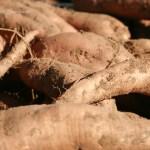 batatas o boniatos