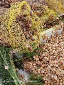Caracoles con hinojo. Receta típica de Sanlúcar de Barrameda