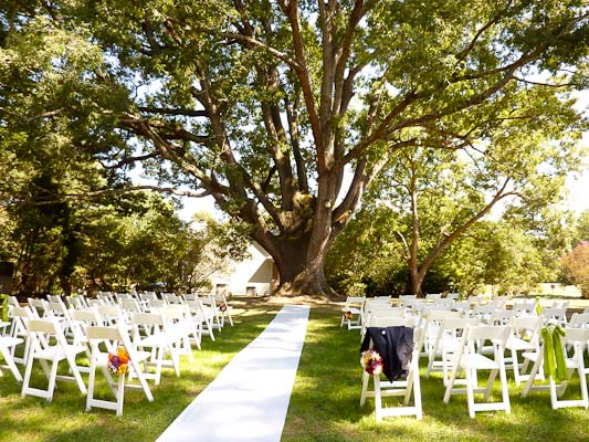 350-year-old-oak-tree-w-chairs