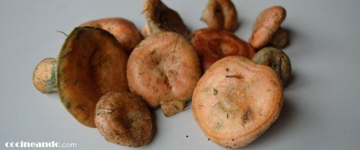 Níscalos (Lactarius deliciosos): características y usos culinarios