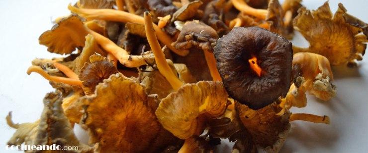 Trompetas amarillas (Cantharellus lutescens): características y usos culinarios