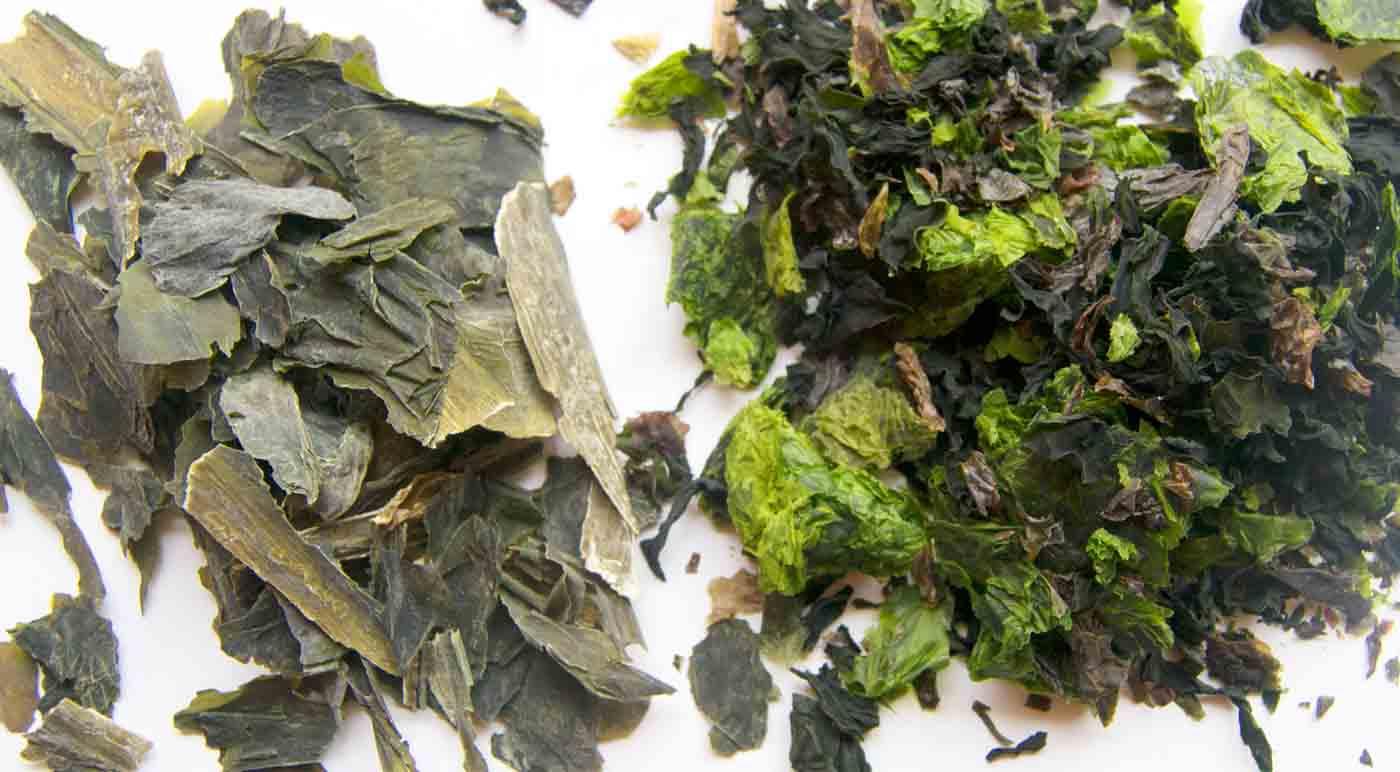 Algas: ¿Cómo incorporar verduras acuáticas a tus platos?