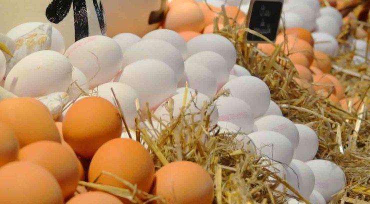 ¿Por qué guardamos los huevos en la nevera al llegar a casa?