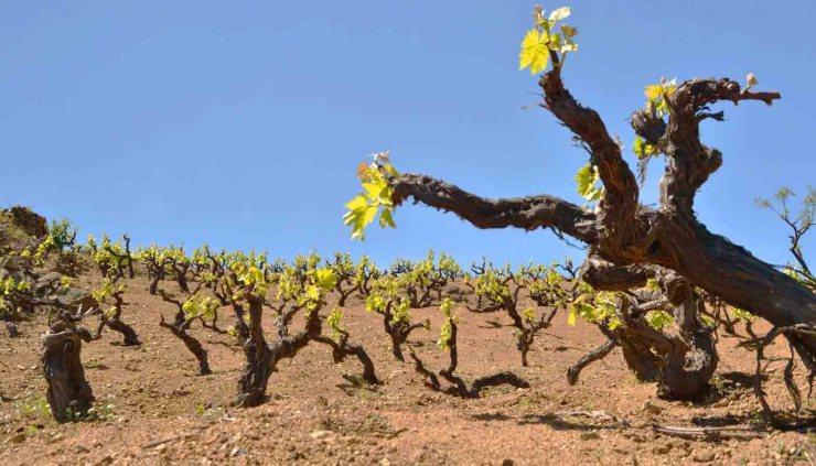 El terruño o terroir y la calidad de los vinos - enología