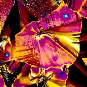 Immagini microscopiche di bevande alcoliche (5/6)