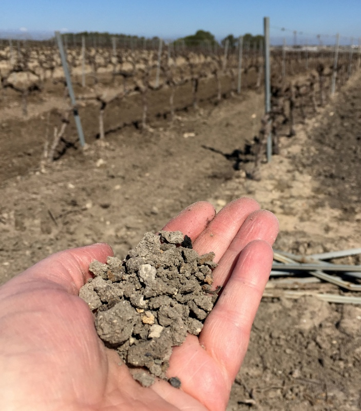 Soil in a vineyard near Sanlucar de Barrameda