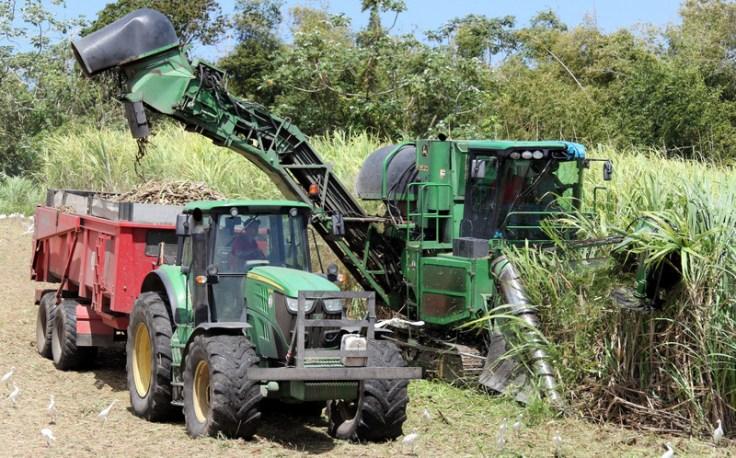 Cane harvesting near Rhum JM, Martinique