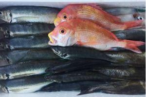 萩大島船団丸の鮮魚