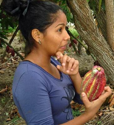 Cocoa Mango Story Farm Ecuador