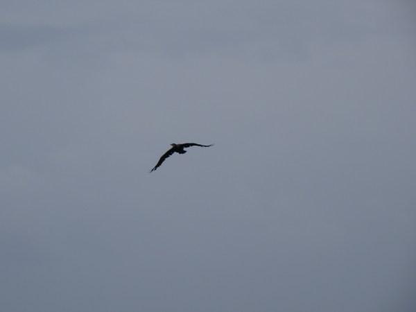 Flug einer Möwe